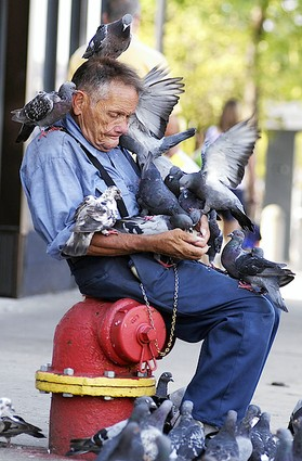 pigeon-man-2.jpg