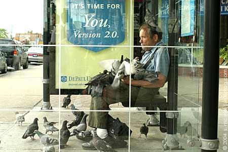 pigeon-man.jpg
